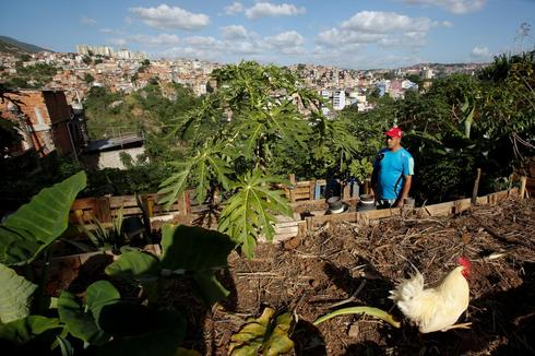 Venezuelans turn to city farming
