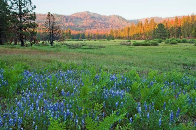 Ackerson Meadow, a 400 acres parcel of land, located at the western edge of Yosemite National Park is shown in this undated photo in California.  Photo courtesty of Yosemite National Park/Handout via REUTERS