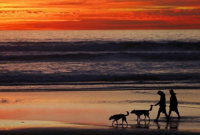 9月13日、ペットの健康に関するリポートによると、犬の寿命は平均11.8歳。2013年の11歳、2002年の10.5歳から延びている。米カリフォルニア州で1月撮影(2016年 ロイター/Mike Blake)