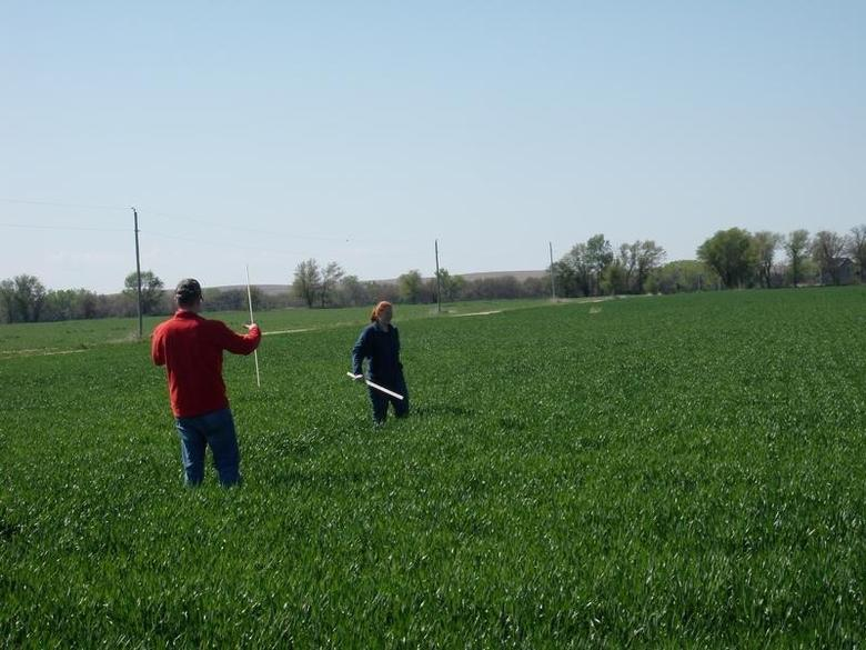 Crop scouts calculate yields in a Kansas wheat field on the first day of their tour of the U.S. Plains hard red winter wheat region in Central Kansas, in this file photo dated May 3, 2011. REUTERS/Mark Weinraub