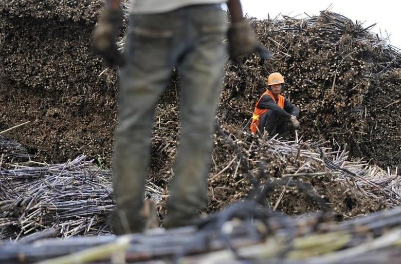 FILE PHOTO - Labourers work on piles of sugarcanes at a sugar refinery in Menghai county, Yunnan province December 6, 2011. REUTERS/Wong Campion