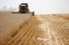 Комбайн жнет пшеницу на поле в поселке Винодельненский, Ставропольский край. Российская экономика в августе 2016 года приостановила падение, продемонстрировав нулевую динамику в годовом выражении, при этом к июлю с исключением сезонности выросла на 0,3 процента после снижения на 0,8 процента в предыдущем месяце, сообщило Минэкономразвития.  REUTERS/Eduard Korniyenko