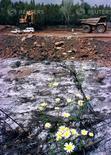Un tribunal andaluz ha reabierto el caso de la polémica adjudicación para reabrir la mina sevillana de Aznalcóllar, cercana al Parque Nacional de Doñana, al admitir la apelación de una compañía minera que perdió el concurso. En la foto de archivo,  unas flores en medio de barro tóxico en la ribera del rio Agrio cerca de Aznalcóllar el 26 de mayo de 1998. . REUTERS/Marcelo del Pozo