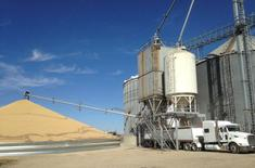 A truck is loaded with corn next to a pile of soybeans at Matawan Grain & Feed elevator near New Richland, Minnesota, U.S. on October 14, 2015. REUTERS/Karl Plume/File Photo