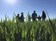 Un grupo de trabajadores se reune en un campo de granos en Leoni, Kansas, 4 Mayo, 2016. El Departamento de Agricultura de Estados Unidos (USDA) elevó el miércoles sus previsiones récord sobre las cosechas domésticas de soja y maíz en la temporada 2016/2017, alentado por aumentos en las estimaciones de los rendimientos en estados productores clave como Iowa, Minesota y Ohio.   REUTERS/Karl Plume