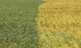 Em foto de arquivo, lavoura de soja é vista na cidade de Primavera do Leste, em Mato Grosso 07/02/2013 REUTERS/Paulo Whitaker