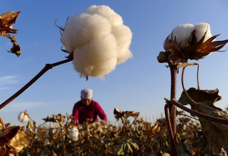 A farmer picks cotton from a field in Hami, Xinjiang Uygur autonomous region, China, November 1, 2012.    REUTERS/China Daily/File Photo