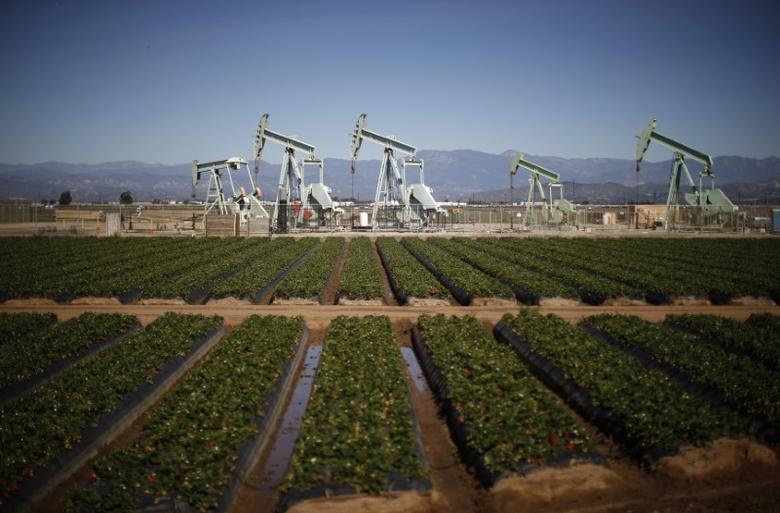 Oil pump jacks are seen next to a strawberry field in Oxnard, California February 24, 2015. Crude oil futures fell on Tuesday as expectations that this week's reports will show U.S. crude inventories rose again countered supportive news of Libyan oilfields being shut. REUTERS/Lucy Nicholson