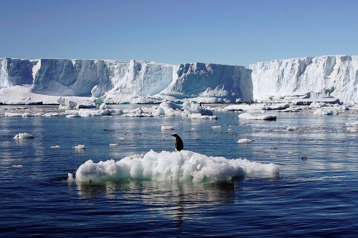 An Adelie penguin stands atop a block of melting ice near the French station at Dumont díUrville in East Antarctica January 23, 2010. Picture taken January 23, 2010.  REUTERS/Pauline Askin/File photo