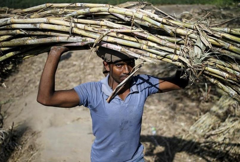 India rules out lowering sugar import tax for now - govt source