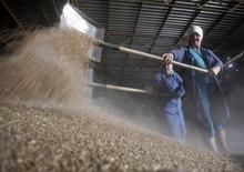 """Работники собирают зерно в хранилище, принадлежащем хозяйству """"Победа"""". Россия должна найти новые рынки сбыта для своего зерна и ускорить экспортные поставки, чтобы снизить давление на внутренний рынок после рекордного урожая в 2016 году, пишет агентство СовЭкон.  REUTERS/Vladimir Konstantinov"""