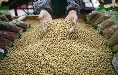 Un trabajador recoge porotos de soja en Wuhan, China. 14 de abril 2014.China, el principal consumidor de soja del mundo, importó 7,66 millones de toneladas de la oleaginosa en enero, el mayor volumen para el mes al menos desde el 2010, indicaron datos de aduanas el viernes, tras el arribo de embarques retrasados y una robusta demanda de la actividad de molienda.REUTERS/Stringer
