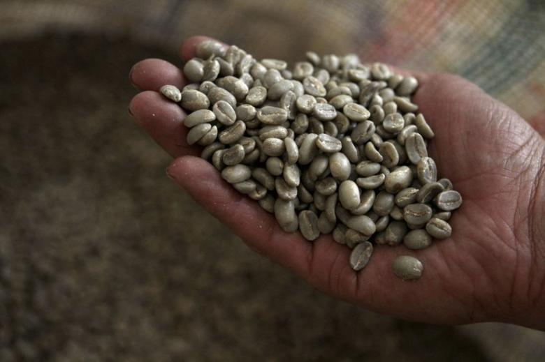 FILE PHOTO - A coffee processing plant worker inspects coffee beans in Bogota May 14, 2012. REUTERS/Fredy Builes