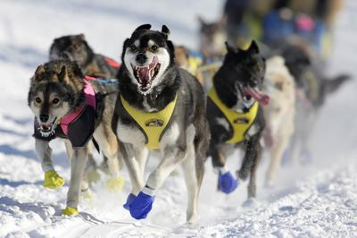 Iditarod race across Alaska