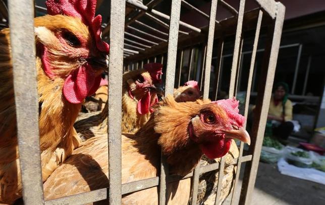 3月13日、中国政府によると、同国国内で2月に報告された「H7N9」型鳥インフルエンザの感染者数は160人で、死者数は61人だった。写真は家畜市場のにわとり。鳥インフルエンザ感染防止のため取引禁止要請が出る前の2月に雲南省で撮影(2017年/ロイター)
