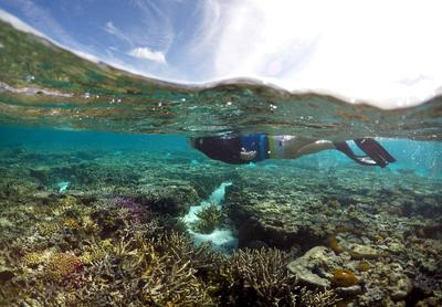 Damage to the Great Barrier Reef