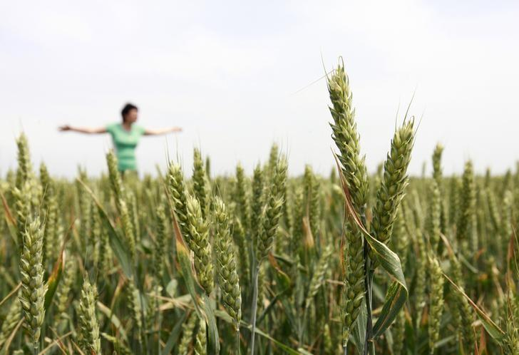 An agriculturist gestures in a wheat field owned by a local agrarian farm near the town of Neftekumsk, some 350 km (217 miles) east of Stavropol, May 24, 2012. REUTERS/Eduard Korniyenko