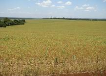 Campos de soja en Encarnación, Paraguay. 10 de enero 2012.La producción de soja del ciclo 2016/2017 en Paraguay superará las 10 millones de toneladas, un volumen récord que marca una recuperación tras dos años difíciles para el sector, dijo el lunes el ministro de Agricultura y Ganadería, Juan Carlos Baruja. REUTERS/Adrian Silva (PARAGUAY - Tags: AGRICULTURE ENVIRONMENT BUSINESS) - RTR2W47E