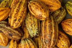Imagen de archivo de unos granos de cacao en Piedra de Plata, Ecuador, jun 4, 2016. Los futuros del cacao subieron el martes desde mínimos de cuatro semanas al agotarse una ola de ventas de tres días, mientras que el café arábiga y el azúcar también avanzaron en el mercado ICE de Estados Unidos.    REUTERS/Guillermo Granja/File Photo