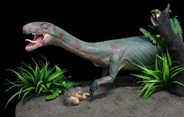 Life model of the new species Teleocrater rhadinus, a close relative of dinosaurs, preying upon a juvenile cynodont, a distant relative of mammals is shown in this handout photo provided April 12, 2017.  Courtesy Museo Argentino de Ciencias Naturales ''Bernardino Rivadavia'' Buenos Aires, Argentina/model constructed by Marcelo Miñana/Handout via REUTERS  ATTENTION EDITORS - THIS IMAGE WAS PROVIDED BY A THIRD PARTY. EDITORIAL USE ONLY.  NO RESALES. NO ARCHIVE