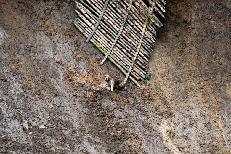 A dog hopes to be rescued in a destroyed area after mudslides caused by heavy rains leading several rivers to overflow, pushing sediment and rocks into buildings and roads, in Manizales, Colombia. REUTERS/Santiago Osorio
