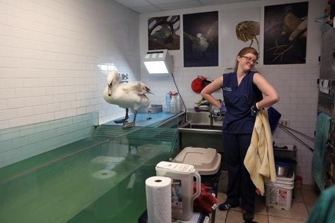 Rehabilitating New York's injured birds
