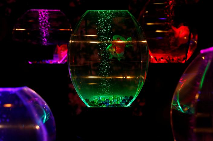 Installations using goldfish in illuminated tanks are displayed at the Art Aquarium exhibition in Tokyo, Japan July 6, 2017. Kim Kyung-Hoon