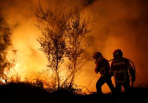 Deadly wildfires in Portugal and Spain