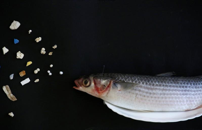 A grey mullet is shown next to microplastic found in Hong Kong waters during a Greenpeace news conference in Hong Kong, China, April 23, 2018. Bobby Yip