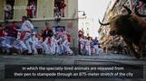 Taking the Shot: Pamplona's running of the bulls