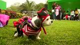 Peru hosts canine Halloween costume contest