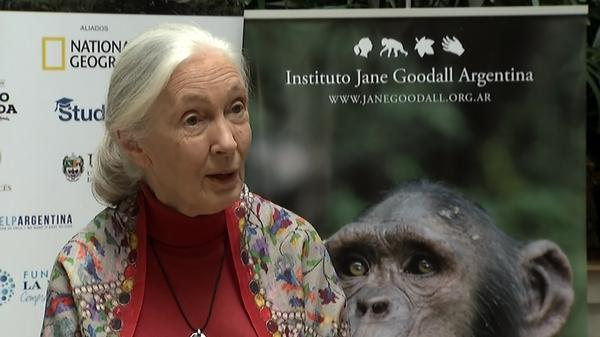 Jane Goodall in Argentina to promote new film