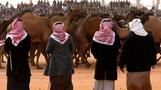 Saudi Arabia's camel beauty pageant keeps tradition alive