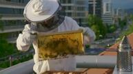 Slovene beekeepers hope to have a stinging impact on bee preservation