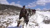 في غابات منغوليا المتجمدة، رعاة الرنة يحافظون على تقاليدهم منذ آلاف السنين