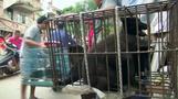中国で恒例の「犬肉祭り」、厳重な警備下で行われる(字幕・22日)