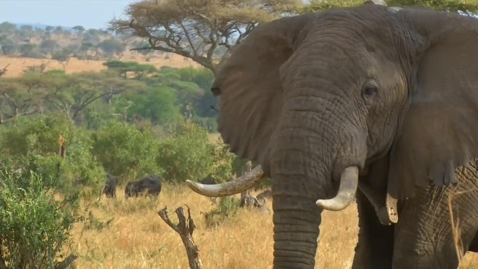 Conservationists in Tanzania use tech platform to protect endangered species