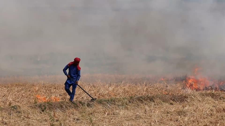 As farmers burn fields, Delhi braces for smog