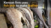 ケニアの食品工場が魚の皮革を製造、爬虫類レザーの代用として期待(6日)