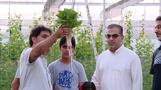 Hydroponic farming to address Saudi's water shortage problems