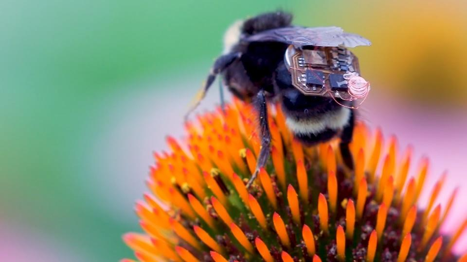 Backpack-wearing bees helping entomologists gather data