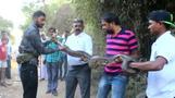 Indien: Rund 3 Meter lange Python-Schlange entdeckt