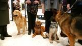 米人気犬ランキング、28年連続トップは?(22日)
