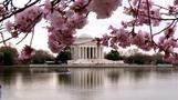 お花見観光、アメリカ各地で盛り上がり