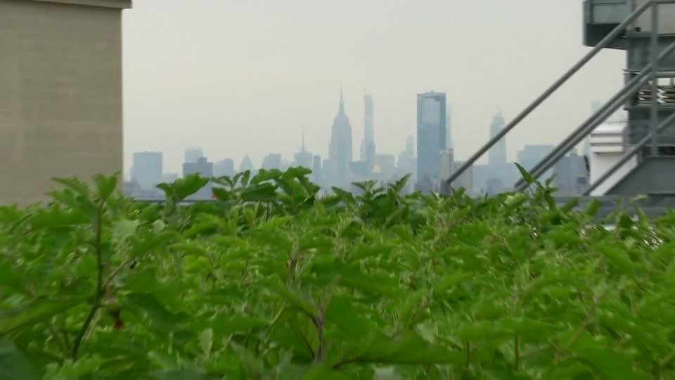 NYC's largest rooftop farm grows in Brooklyn