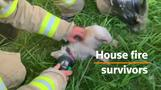 Dogs revived by fire crew after house fire