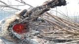 Bolsonaro will Militär gegen Waldbrände einsetzen