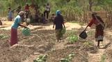 Central African Republic farming project helps women root for peace