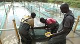 Small-scale fish farmers lead Ugandan industry's recovery