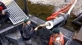 Behold: the salmon cannon